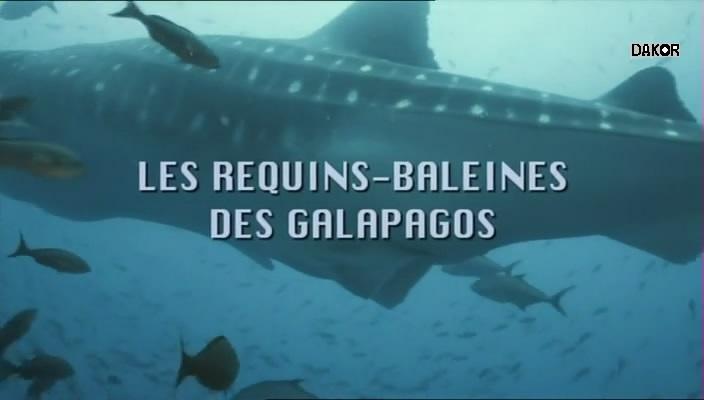 Les requins-baleines des Galápagos [TVRIP]