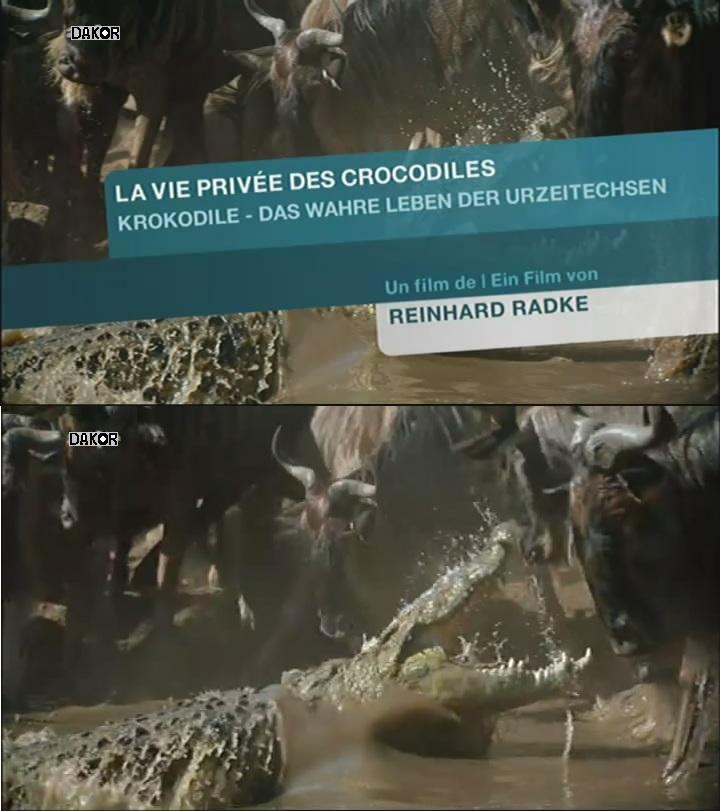 La vie privée des crocodiles - 01/11/2012 [TVRIP]