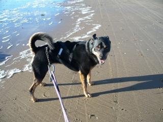 balade sur la plage un samedi de novembre  12110307503115041810511041