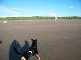 balade sur la plage un samedi de novembre  12110307540115041810511071