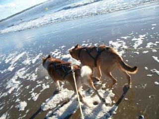 balade sur la plage un samedi de novembre  12110307543715041810511074