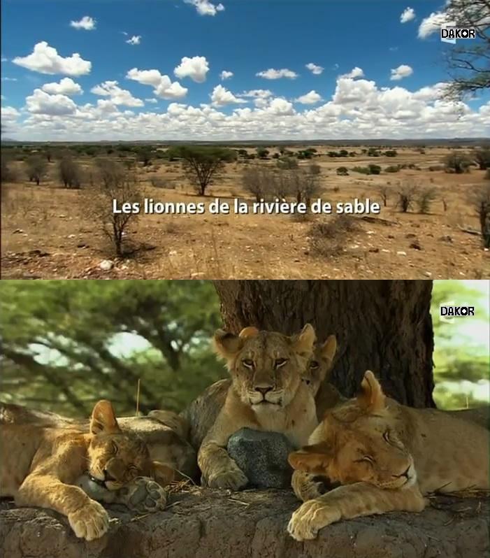 Les lionnes de la rivière de sable [TVRIP]
