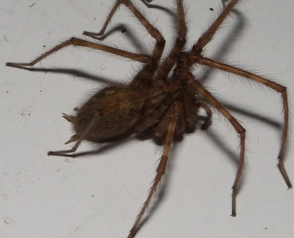 http://nsm08.casimages.com/img/2012/11/06//12110612291215478510518780.jpg