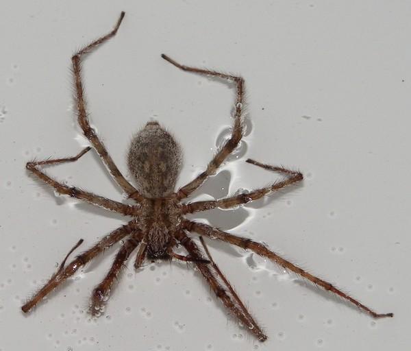 http://nsm08.casimages.com/img/2012/11/06//12110612293115478510518781.jpg