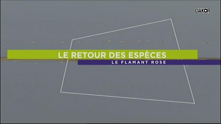 Le retour des espèces - Le flamant rose - [1/3][TVRIP]