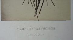 Richebourg Armes et Armures<br /> Tsarskoé Sélo 1859 pl 11<br /> (3).JPG