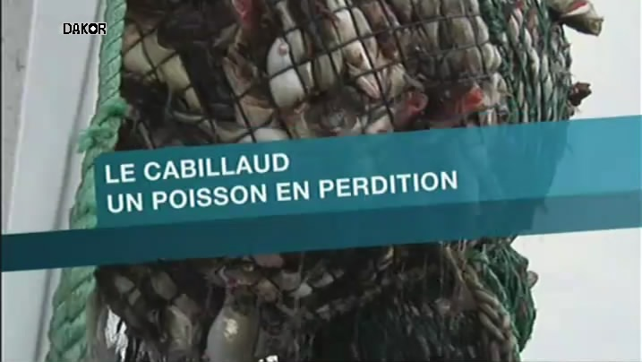 Le cabillaud - Un poisson en perdition [TVRIP]
