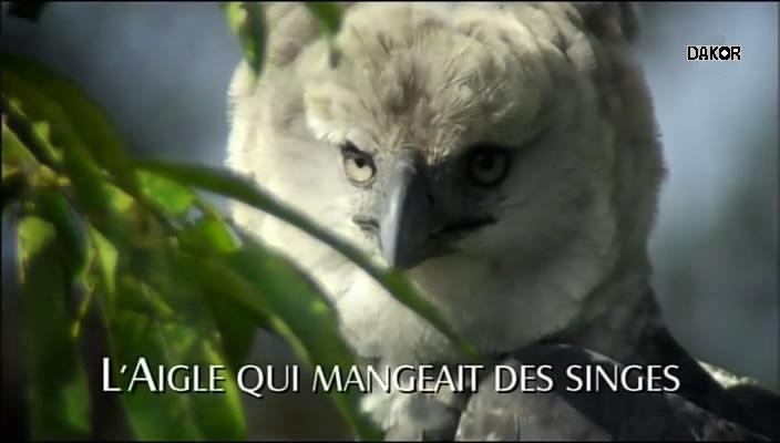 L'aigle qui mangeait des singes [TVRIP]