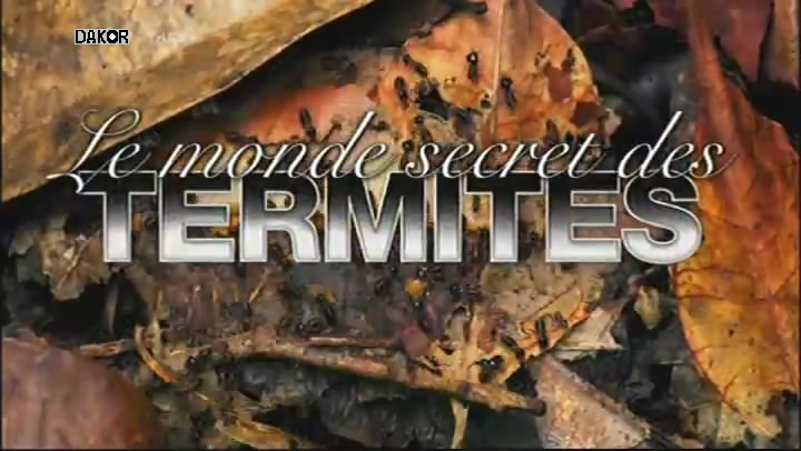 Le monde secret des termites [TVRIP]