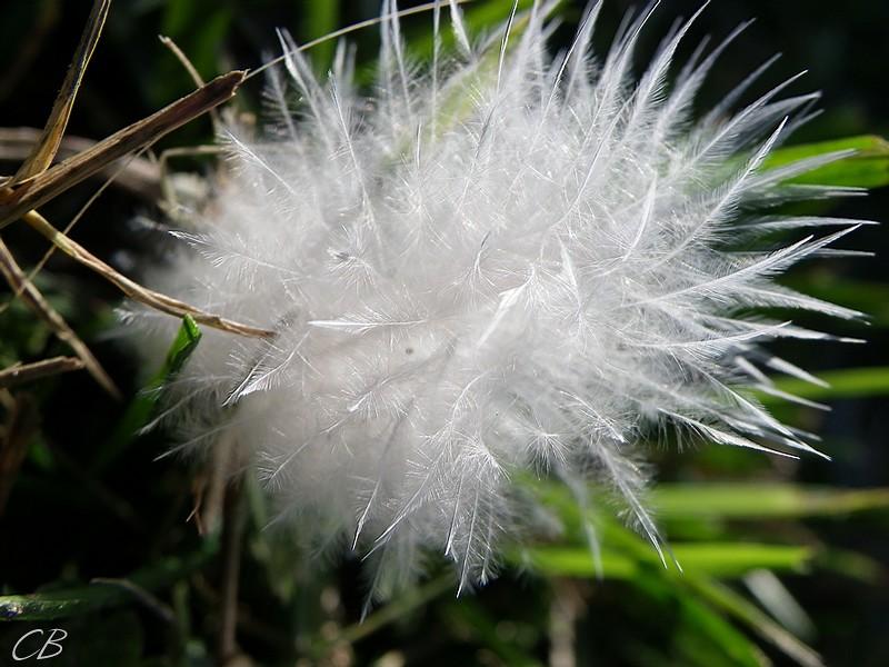 Decembre 16 2012 plume 1