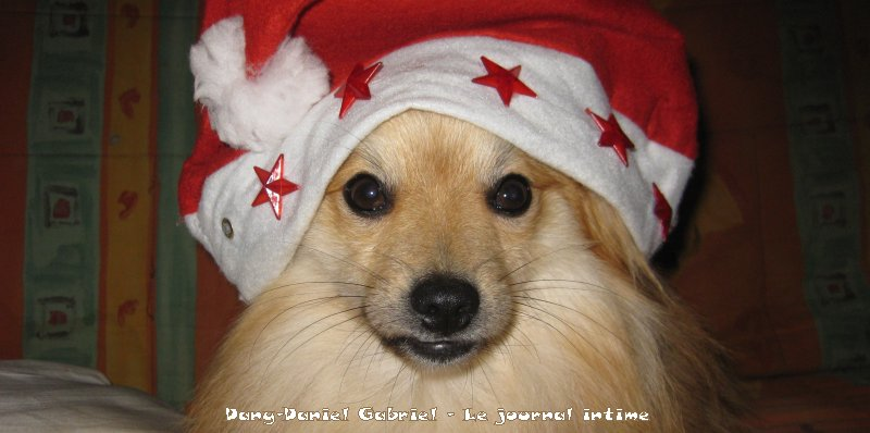 gribouille le chien spitz allemand