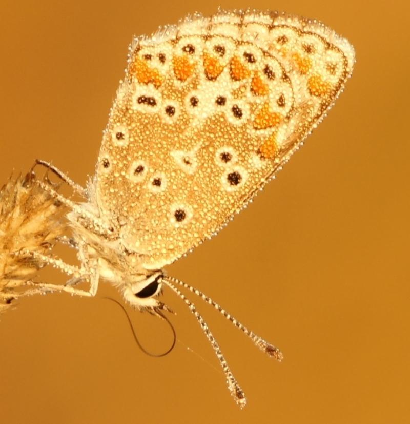 Identification de trois papillons 1212200534417808310683367