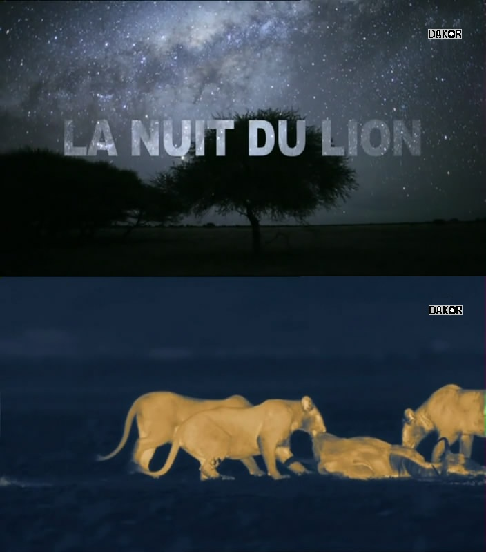 La nuit du lion [TVRIP]