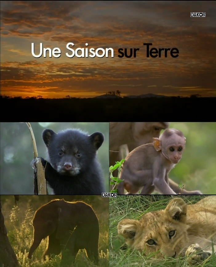 Download Movie Une saison sur Terre [TVRIP]