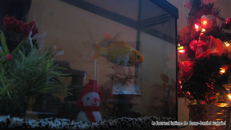 aquarium noel