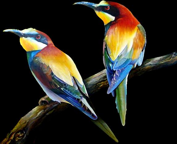 oiseauxcolors