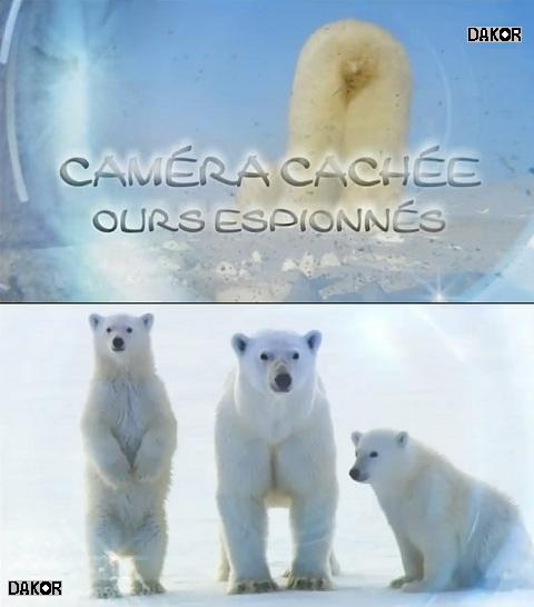 Caméra cachée, ours espionnés [TVRIP]
