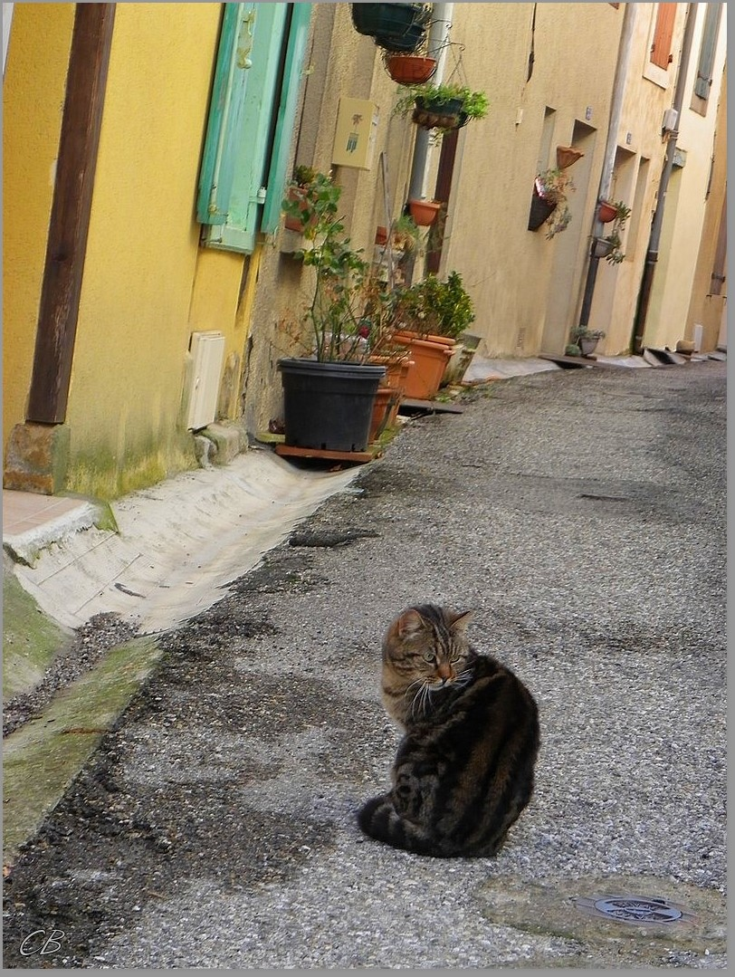 Villasavary  et ses chats 17 01 2013 2