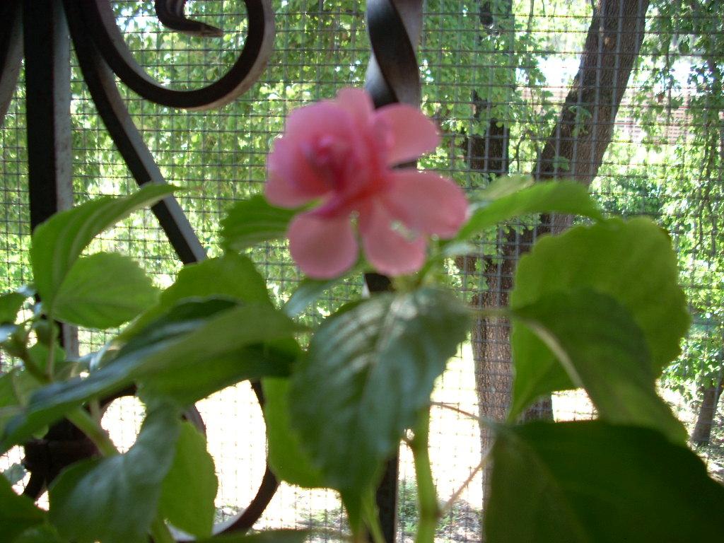 Fleurs Dites Gouttes De Sang