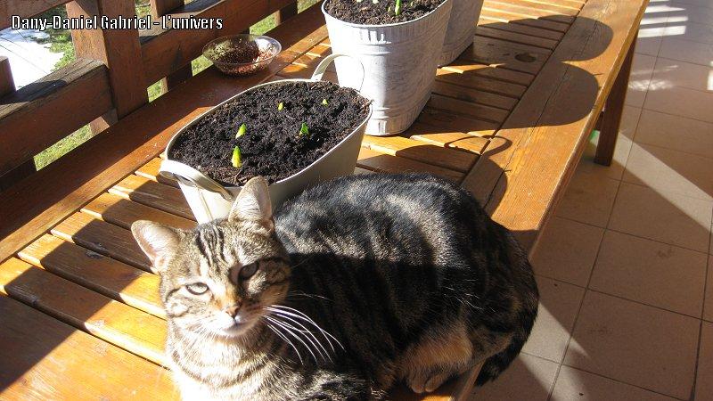 chat soleil narcisse
