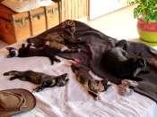 Ma proposition de couchsurfing en Dordogne (24120) Mini_1302200244317723310887004