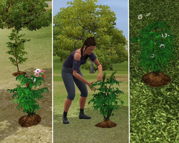 Vos photos sims 3 University  - Page 3 1303121050513155410960633