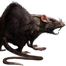 LES RATS ! 13032104025115523610995777