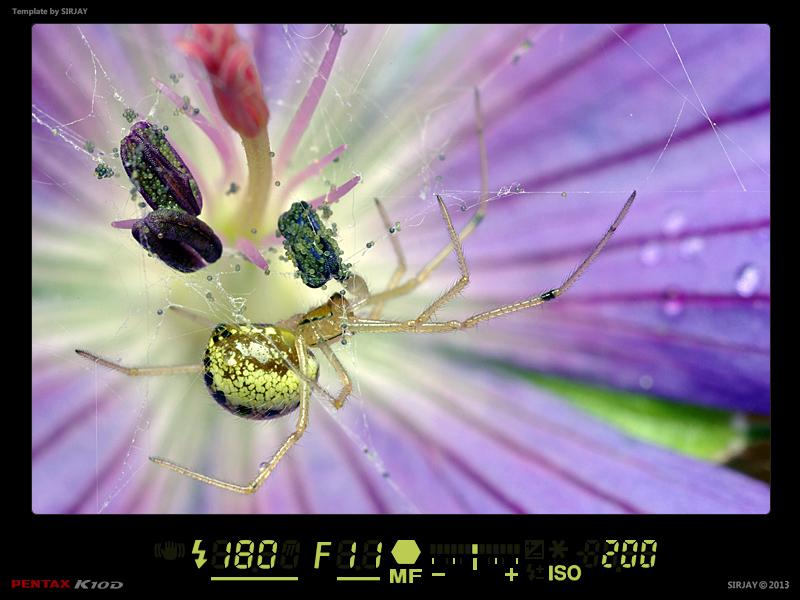 (NATURE: Faune/Insecte) - Macro Fond Abstrait 13032206491914458410997552