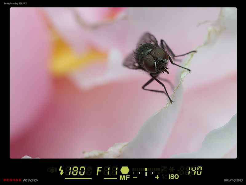 (NATURE: Faune/Insecte) - Macro Fond Abstrait 13032206491914458410997554