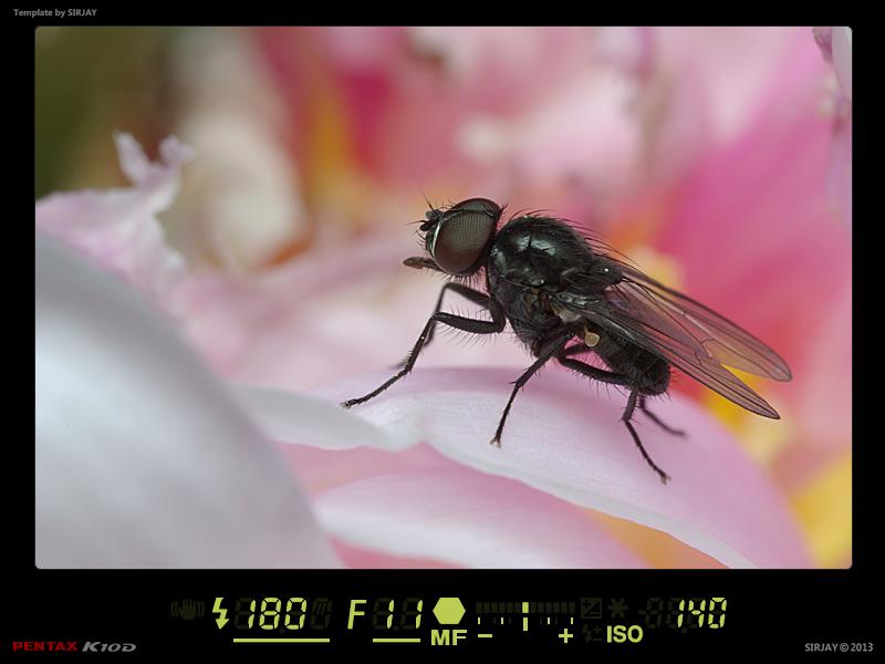 (NATURE: Faune/Insecte) - Macro Fond Abstrait 13032206492014458410997555