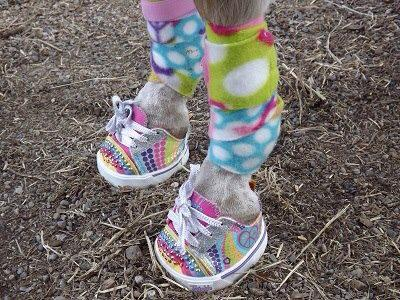 Boots / Hipposandales pour l'endurance - Page 2 13040502581513277211050644