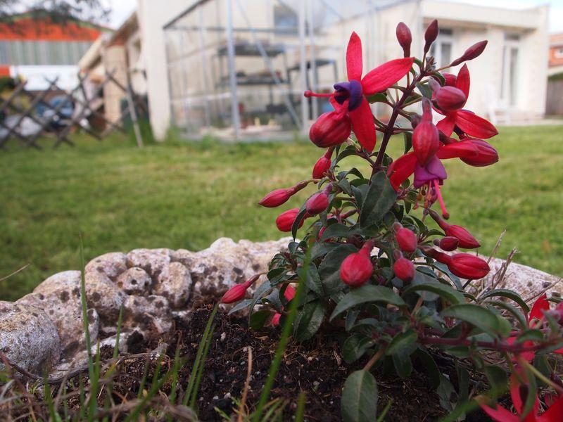 Quelques photos pour le printemps 130422032112650411112199
