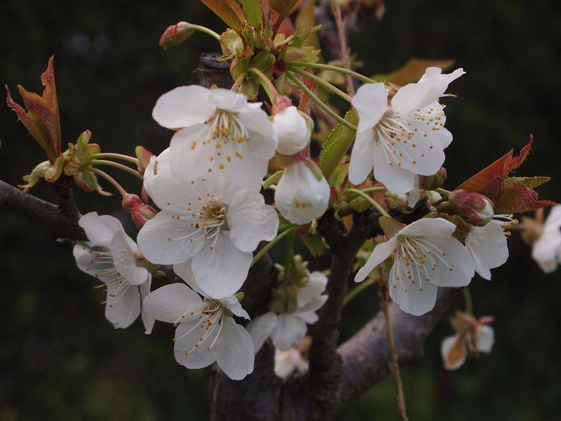 Quelques photos pour le printemps 130422032128650411112203