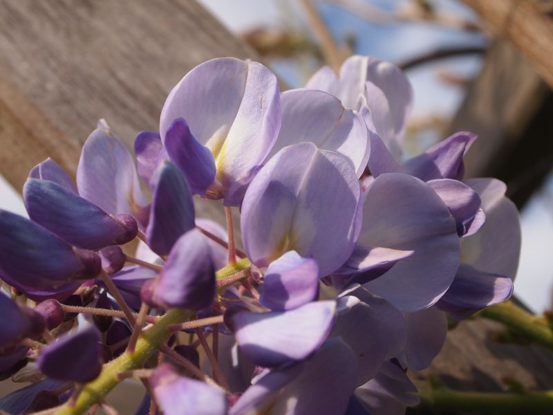 Quelques photos pour le printemps 130422032144650411112208