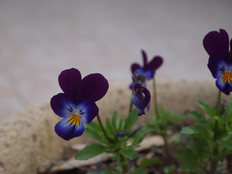 Quelques photos pour le printemps 130422032152650411112210