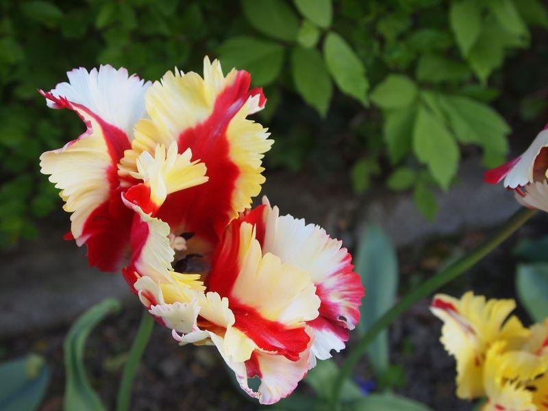 Quelques photos pour le printemps 130422032154650411112218