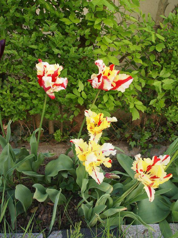 Quelques photos pour le printemps 130422032236650411112220