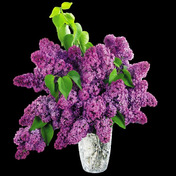 fleur-lilas reine