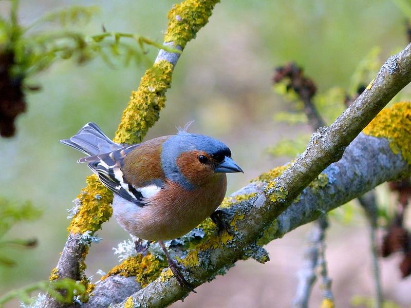 Une avalanche ... D'oiseaux ! ils se sont donnés le mot . 13050108114816129911143789