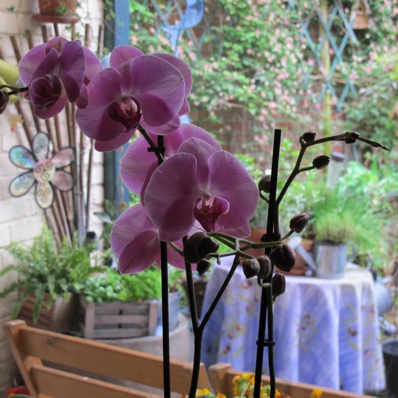 Ma nouvelle orchidée !! 1305180208058300611200999