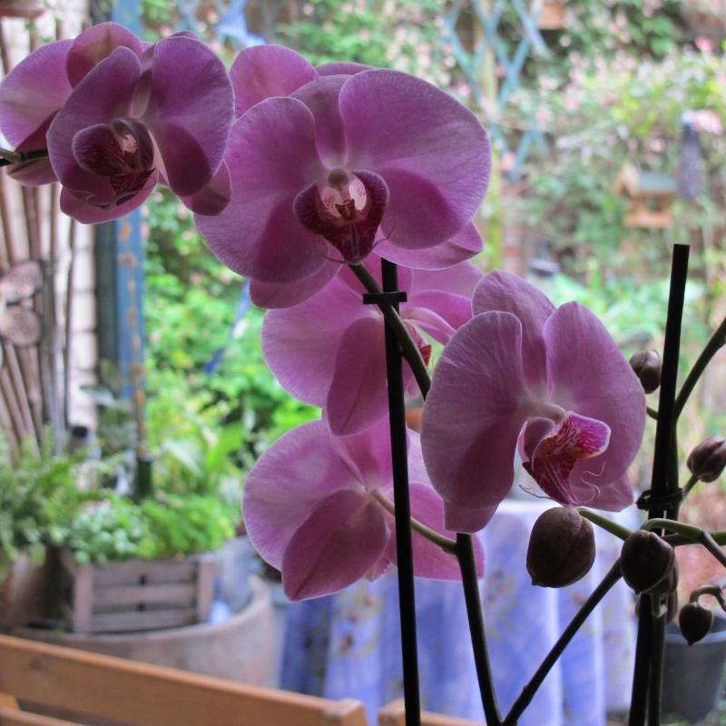 Ma nouvelle orchidée !! 1305180208118300611201001