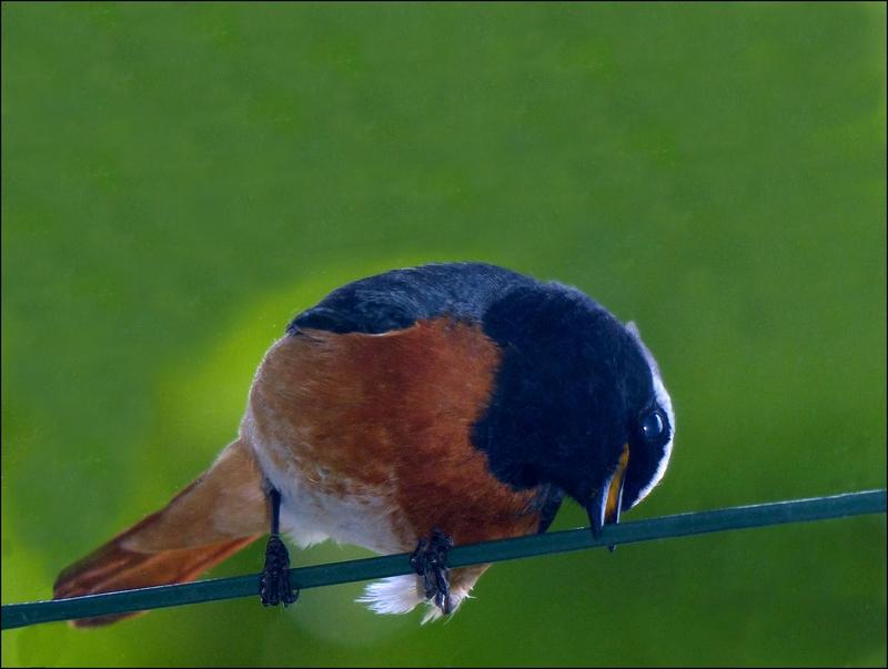 Une avalanche ... D'oiseaux ! ils se sont donnés le mot . 13052008360216129911207164