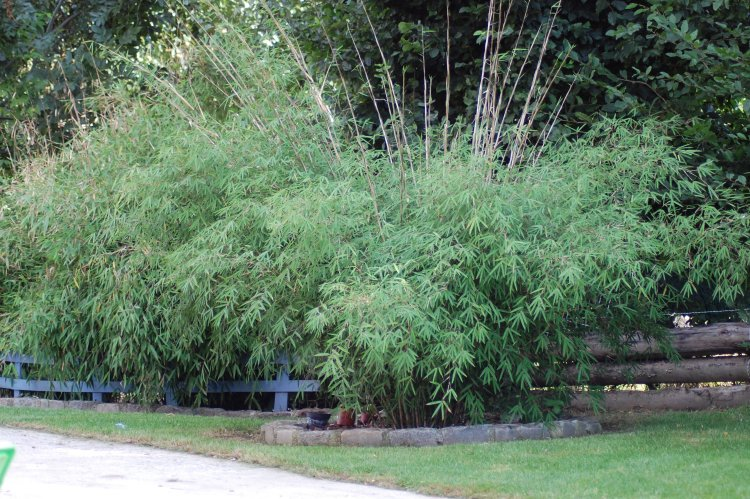 le circuit de valentino forum des fous de bambous. Black Bedroom Furniture Sets. Home Design Ideas