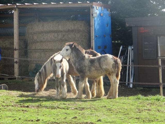 Daisy, Dean et leur nouvelle copine 1310211037438035811658897