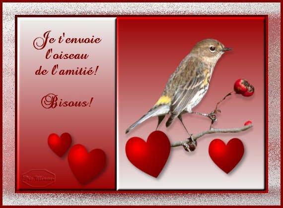 oiseau amitié (planete)