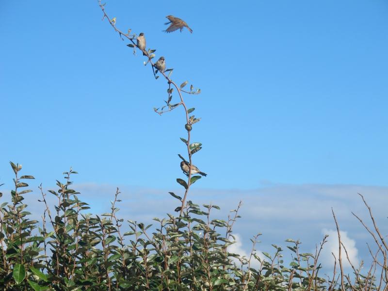 L'arbuste aux oiseaux... 1311020929168300611697941