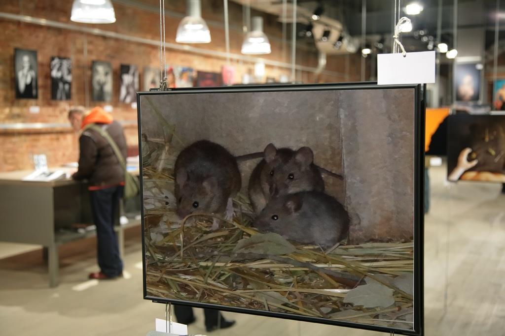 trois petites souris c 39 est chez moi. Black Bedroom Furniture Sets. Home Design Ideas