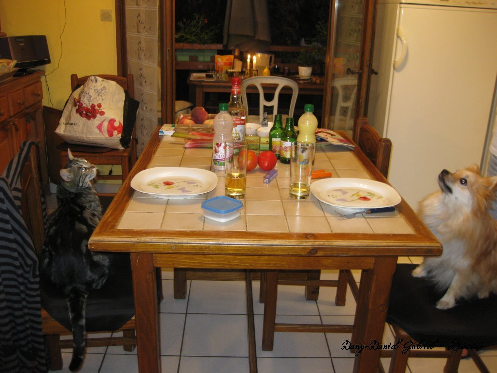 chat chien mange a table