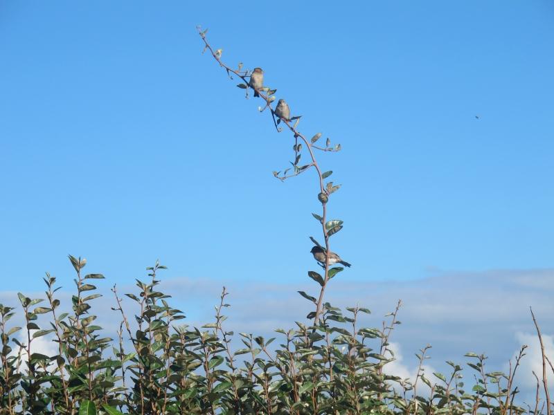 L'arbuste aux oiseaux... 1311180147118300611743814