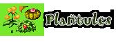 Les chroniques d'Alandum : Récits d'un autre monde 13112205365616973311756436